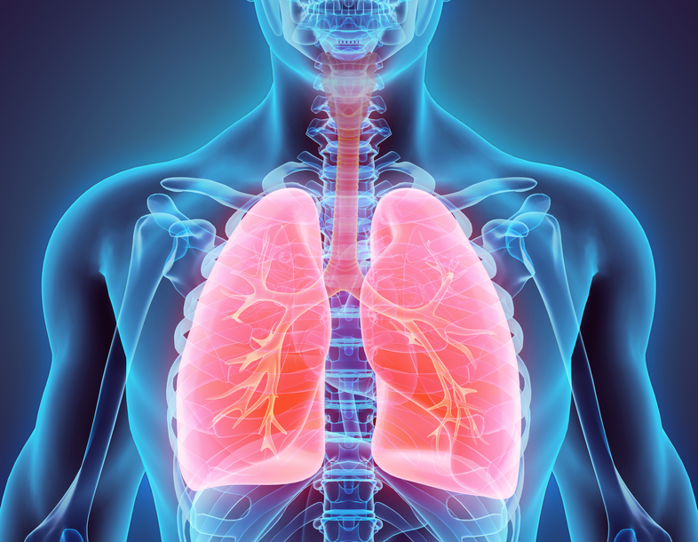 lungs 2