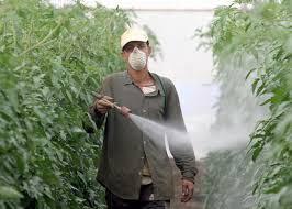 كل ماتريد معرفته عن مرض رئة المزارع