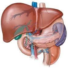 قصور الكبد الصاعق