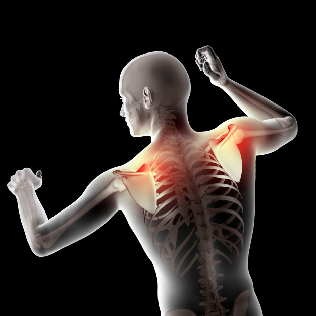 3d male medical figure with shoulder blades highlighted 1048 10644 1
